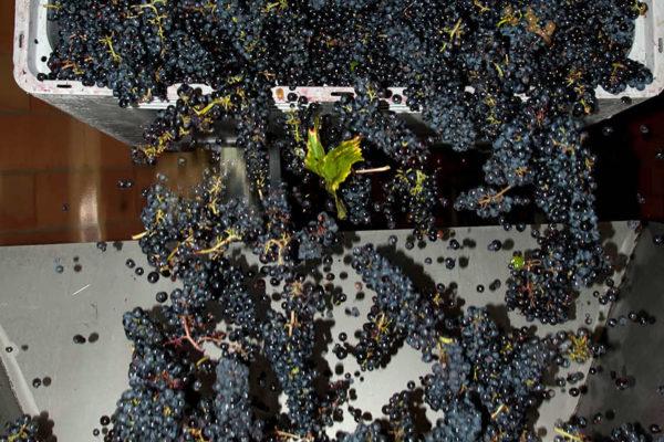 domaine du maupas - jérôme cayol - la vinification 1