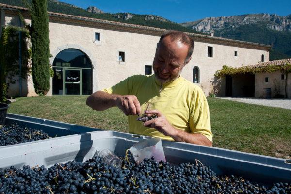 domaine du maupas - jérôme cayol - la vinification 2
