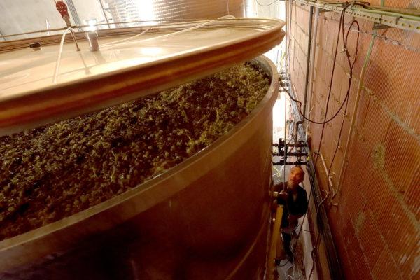 domaine du maupas - jérôme cayol - la vinification 3