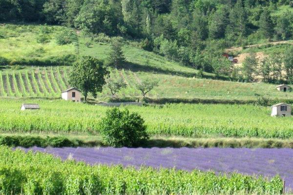 domaine du maupas - jérôme cayol - le vignoble 6